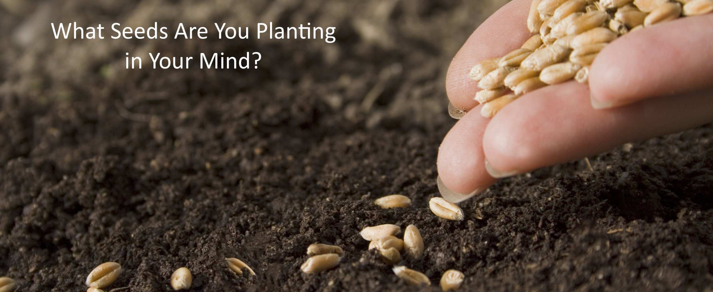 What Seeds are You Planting in Your Mind?